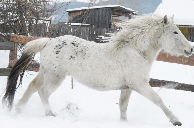 Бежит по снегу