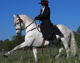 Как научить лошадь испанскому шагу