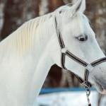 Терская порода лошадей: экстерьер, характер и фото