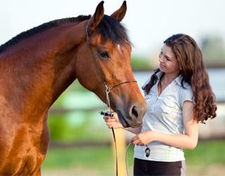 Выбор лошади