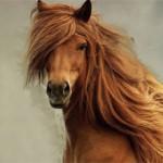 Зачем лошади нужна грива и как за ней ухаживать