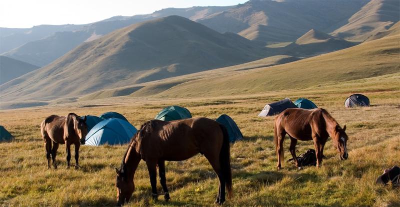Лошади Киргизии