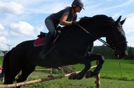 Лошади кладрубской породы