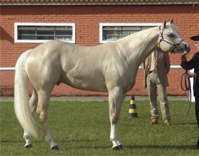 Булонская порода лошадей