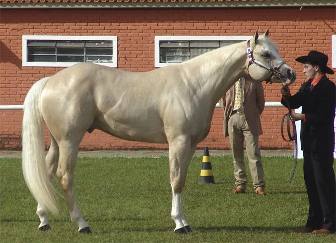 Вид коня