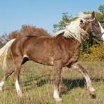 Башкирская порода лошадей: история и особенности