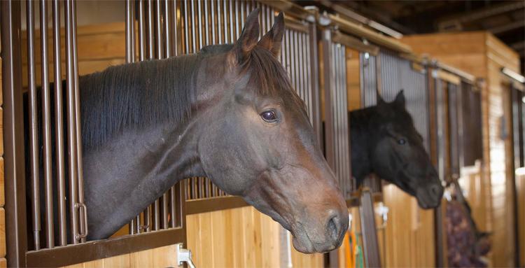 Место для лошади