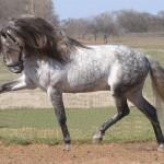 Грозный конь