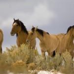 Вольные лошади