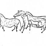Происхождение и эволюция лошадей