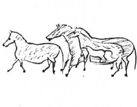 Происхождение лошадей