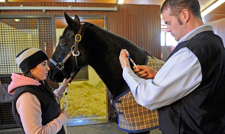 Лошадь и ветеринар