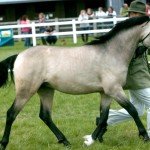 Уэльский пони с хозяином