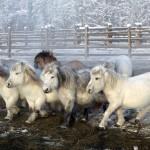 Милые лошадки