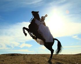 Казахская порода лошадей