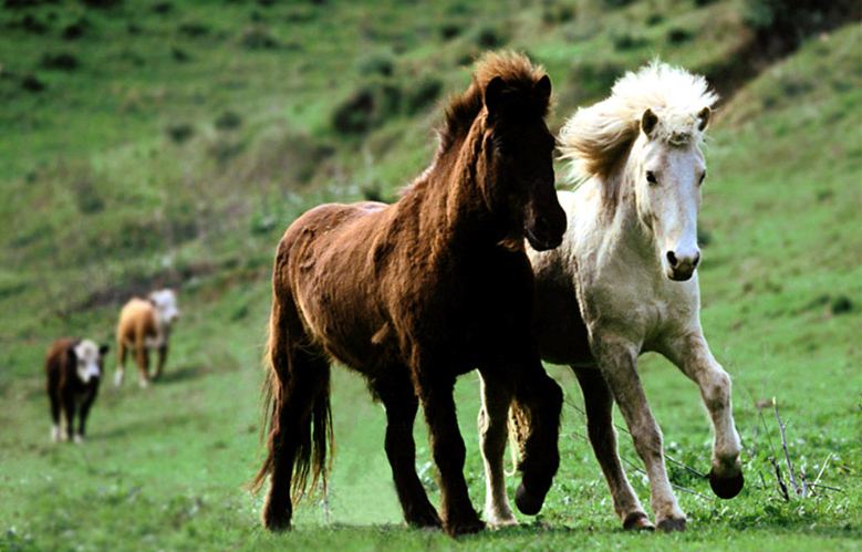 Лошади гор