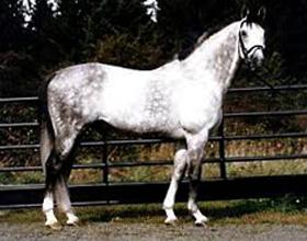 Ольденбургская порода лошадей