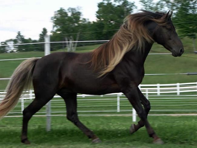 Конь игреневой масти