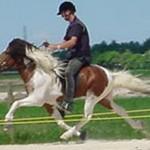 Иноходь лошади — что это такое