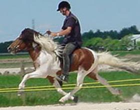Иноходь лошади