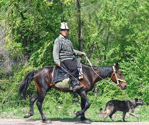 Киргизкая порода и всадник