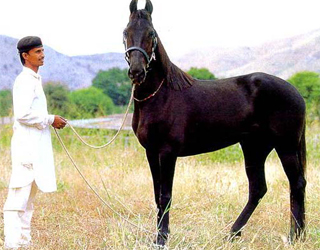Лошадь и хозяин