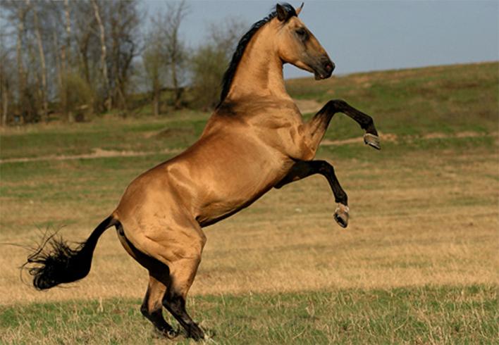 Солнечная лошадь