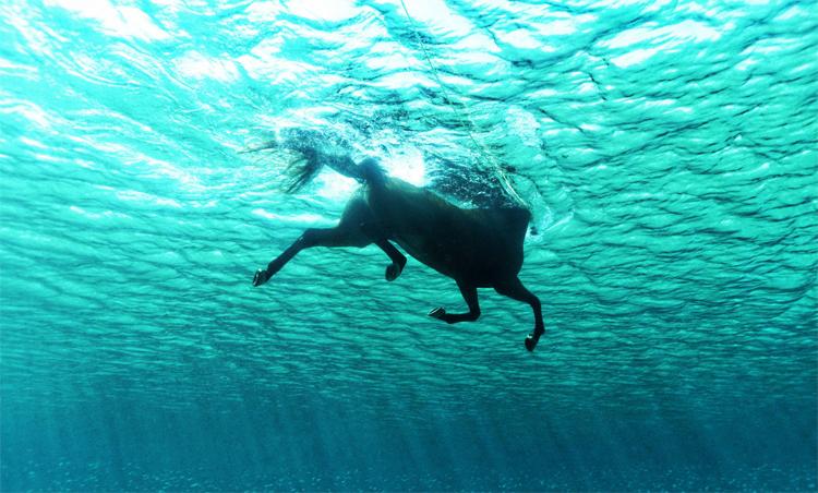 Лошадь плывет