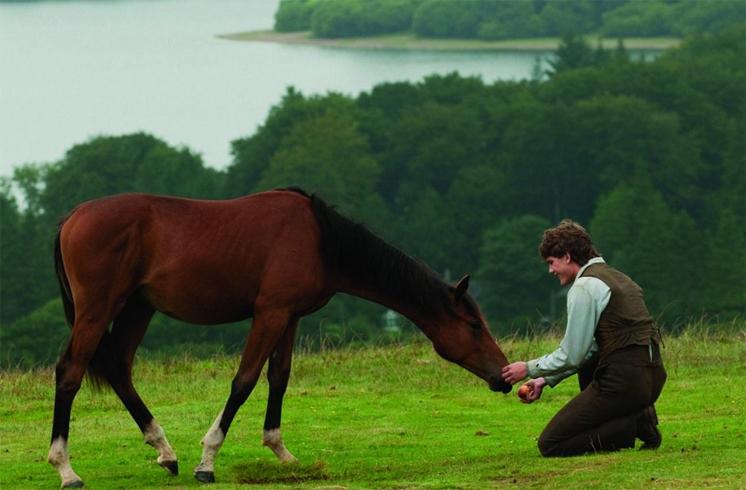 Конь в кино