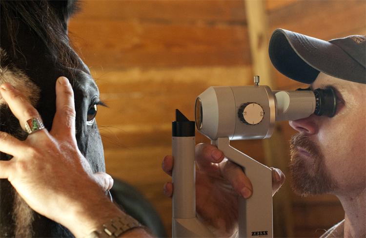 Проверка зрения у лошади