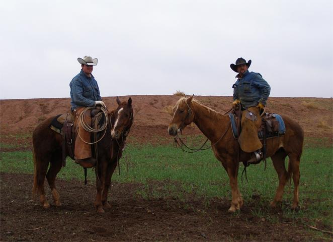 Ковбойские лошади