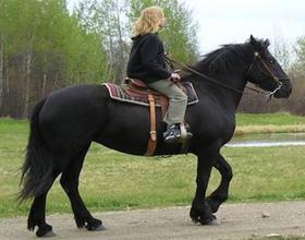 Канадская порода лошадей