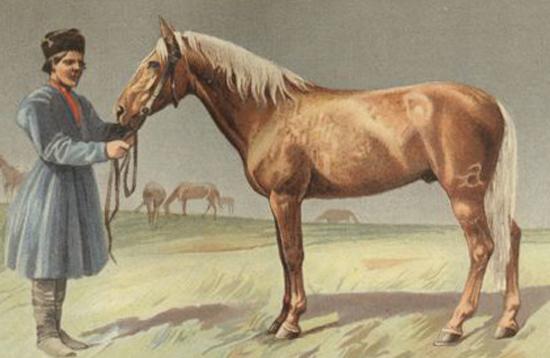 Картинка калмыцкой лошади